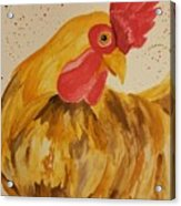 Golden Chicken Acrylic Print
