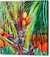Golden Coconuts Acrylic Print