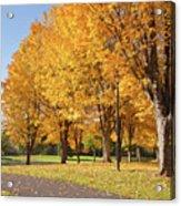 Golden Colors In Autumn Bellavista Park Oregon. Acrylic Print