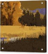 Golden Cottonwood Acrylic Print