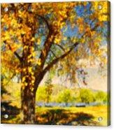Golden Days Acrylic Print