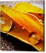 Golden Droplets Acrylic Print