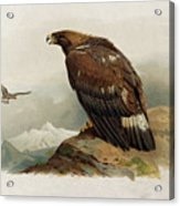 Golden Eagle By Thorburn Acrylic Print