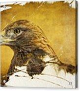 Golden Eagle Grunge Portrait Acrylic Print