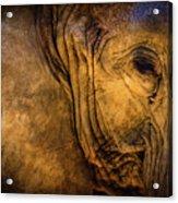 Golden Elephant Acrylic Print