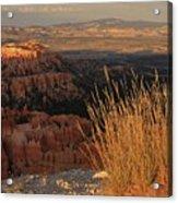 Golden Evening Light Bryce Canyon 1 Acrylic Print
