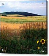 Golden Fields Forever Acrylic Print