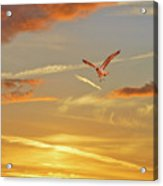 Golden Flight Acrylic Print