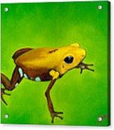 Golden Frog Of Supata Acrylic Print by Sabina Espinet