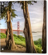 The Trees Of The Golden Gate Acrylic Print