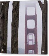 Golden Gate Through The Trees Acrylic Print