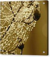 Golden Globes Acrylic Print