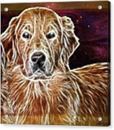 Golden Glowing Retriever Acrylic Print