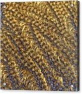 Golden Grains - Hoarfrost On A Solar Panel Acrylic Print