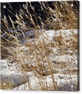 Golden Grasses In Sun And Snow Acrylic Print