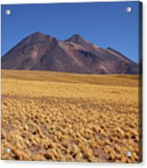 Golden Grasslands And Miniques Volcano Chile Acrylic Print