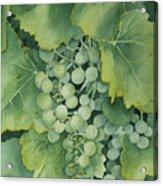 Golden Green Grapes Acrylic Print