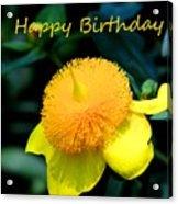 Golden Guinea Happy Birthday Acrylic Print