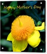 Golden Guinea Happy Mothers Day Acrylic Print
