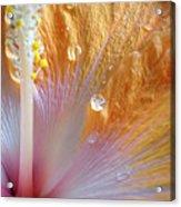 Golden Hibiscus Acrylic Print