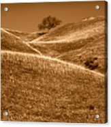 Golden Hills Of California Photograph Acrylic Print