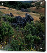 Golden Hills Of Summer Acrylic Print