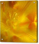 Golden Hour Flower Acrylic Print
