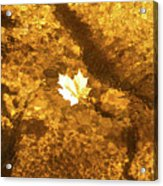 Golden Leaf In Water Acrylic Print
