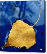 Golden Leaf Acrylic Print
