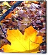 Golden Leaf Acrylic Print