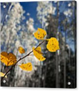 Golden Leaves Against A Muted Forest Acrylic Print