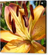 Golden Lily Flower Orange Brown Lilies Art Prints Baslee Troutman Acrylic Print