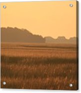 Golden Marshes Acrylic Print