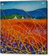Golden Meadow Acrylic Print by John  Nolan