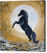 Golden Moon Acrylic Print