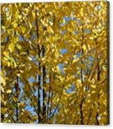Golden October Acrylic Print