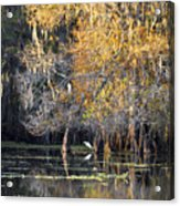 Golden On The River Acrylic Print