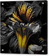 Golden Paintbrush  Acrylic Print