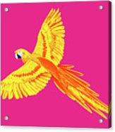 Golden Parrot Acrylic Print