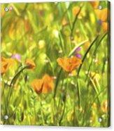 Golden Poppies In A Gentle Breeze  Acrylic Print