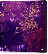 Golden Purples Acrylic Print