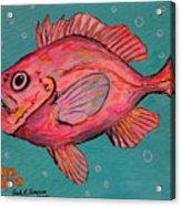 Golden Redfish Acrylic Print