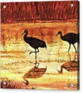 Golden Reflections Acrylic Print