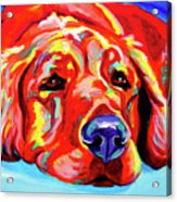 Golden Retriever - Ranger Acrylic Print by Alicia VanNoy Call