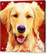 Golden Retriever 3 Acrylic Print