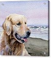 Golden Retriever At The Beach Acrylic Print