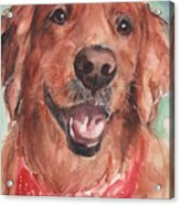 Golden Retriever Dog In Watercolori Acrylic Print