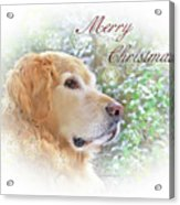 Golden Retriever Dog Merry Christmas Card Acrylic Print