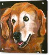 Golden Retriever Fur Child Acrylic Print by Susan A Becker