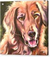 Golden Retriever More Than You Know Acrylic Print by Susan A Becker